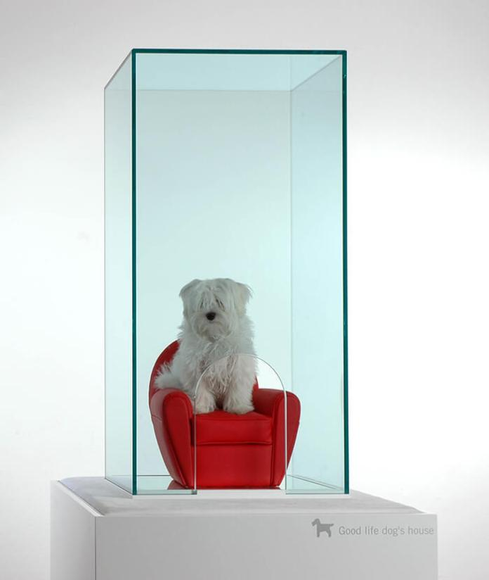 Modern glass dog house ideas