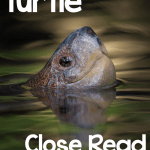 Turtle Close Read FREEBIE and School's Out! Survival Pack