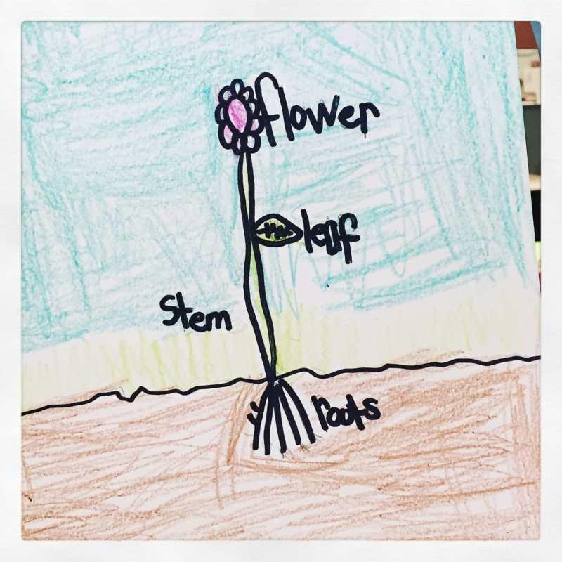 flower label freebie