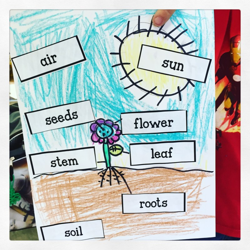 label a plant first grade
