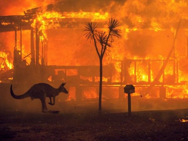 オーストラリアで起こっている現実。〜僕たちに何かできることはないか〜
