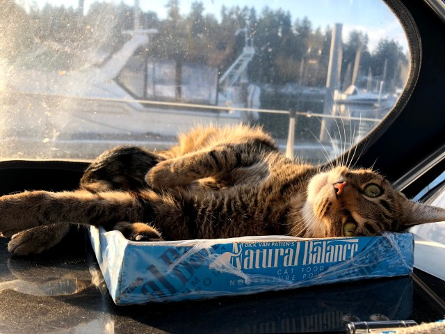 Ella, the Boat Kitty, sunning herself on a warm summer day #thankful #cat #boatkitty