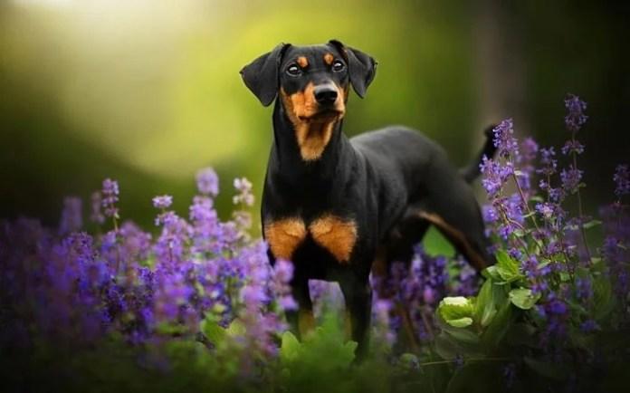 Easy To Train Dog Breeds – Top 10 Impressive Tricks