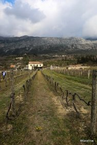 Karaman Winery