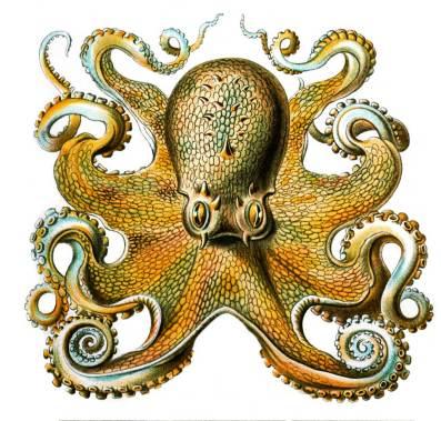 6078671344_f3796380b4_b_octopus1