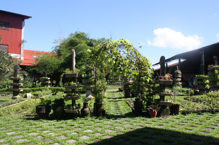 The vegetable garden in front of the house.