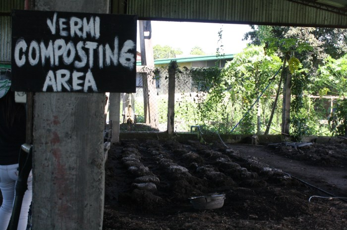 The area where they do vermi composting.