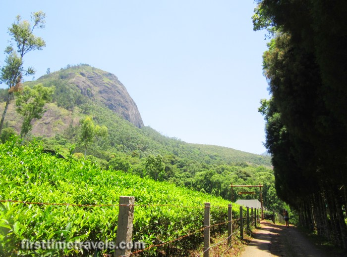 Kerala Blog Express Munnar