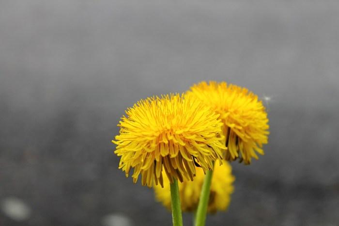 weeds photo