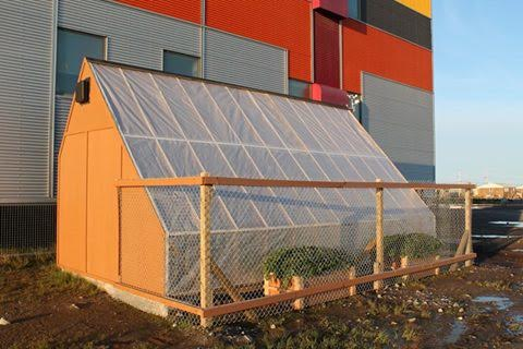 The Arviat greenhouse, Photo by Shirley Tagalik