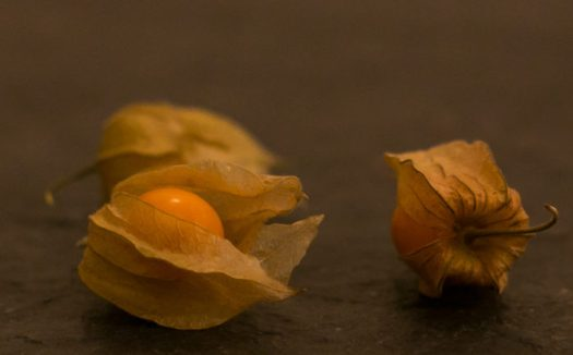 Ground cherries in their husk - wikimedia commons