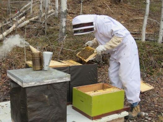 David McBurney's honey bees