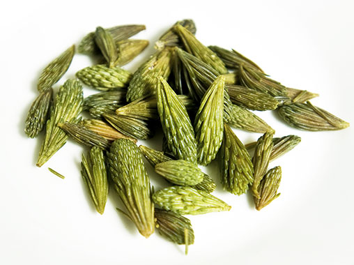 Spruce tips are a versatile ingredient