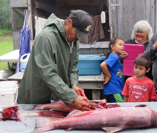 King Salmon being harvested. Photo by Suzanne Crocker. From FirstWeEat.ca, the Food Security North of 60 website supporting First We Eat, a documentary by Yukon filmmaker Suzanne Crocker about eating only locally-grown foods in in Dawson City, Yukon, in Canada's North, for one year.