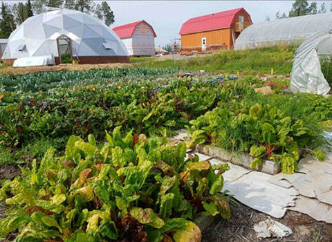 NFTI: How to Grow Food for 200 People
