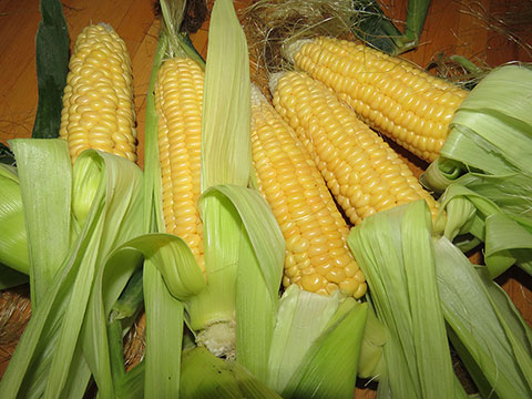 A Good Year for Corn in Dawson