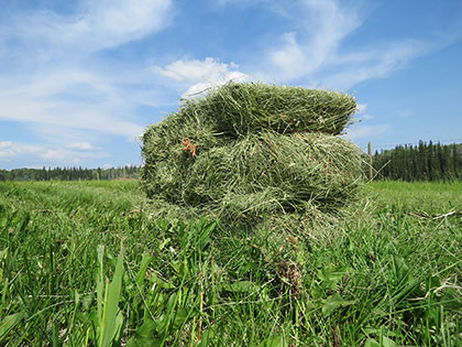 Make Hay While the Sun Shines