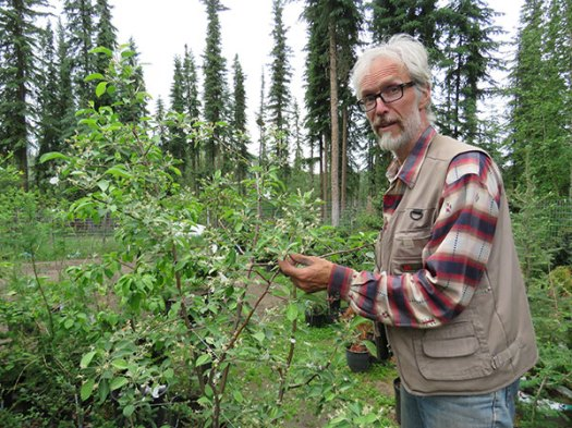 John Lenart with apple tree. From FirstWeEat.ca, the Food Security North of 60 website supporting First We Eat, a documentary by Yukon filmmaker Suzanne Crocker about eating only locally-grown foods in in Dawson City, Yukon, in Canada's North, for one year.