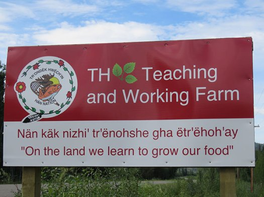 TH Teaching and Working Farm, owned by the Tr'ondëk Hwëch'in First Nation, Dawson City, Yukon. From FirstWeEat.ca, the Food Security North of 60 website supporting First We Eat, a documentary by Yukon filmmaker Suzanne Crocker about eating only locally-grown foods in in Dawson City, Yukon, in Canada's North, for one year.