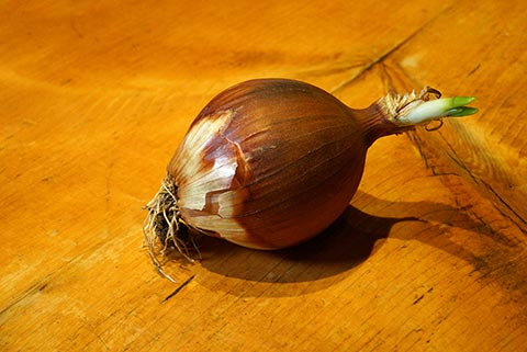 Suzanne's Blog: The Last Onion