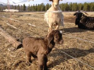 Whitehorse, Yukon - Aurora Mountain Farm