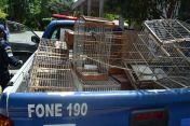 Fiscal Ambiental do Natal - GAAM - DEPREMA - Resgate de pássaros - (30)