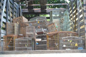 Fiscal Ambiental do Natal - GAAM - DEPREMA - Resgate de pássaros - (42)