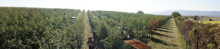 Apfelgarten bei der Bergkapelle