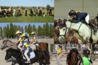 Mosaico_Pony