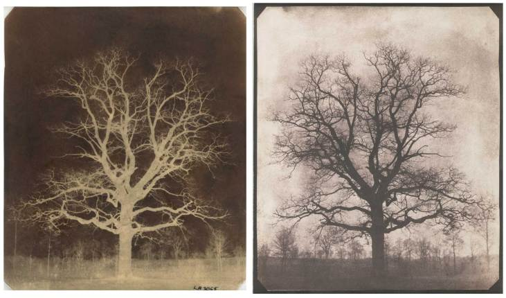 fox-talbot-early-calotype-1842-oak-tree