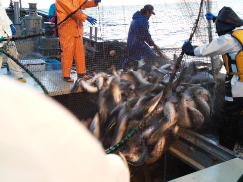 カッパーリバーの紅鮭とは?