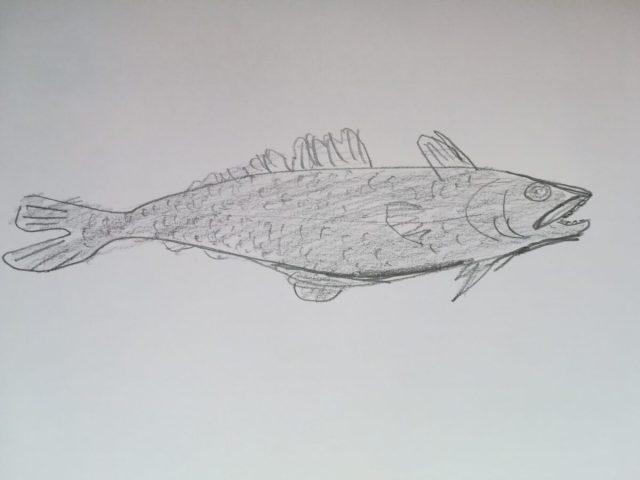 メロとはどんな魚?以前は銀ムツと呼ばれていました。