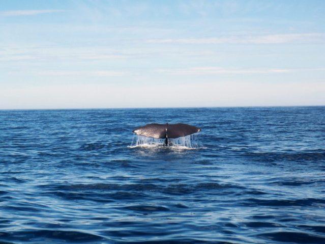 なぜ捕鯨に反対するの?