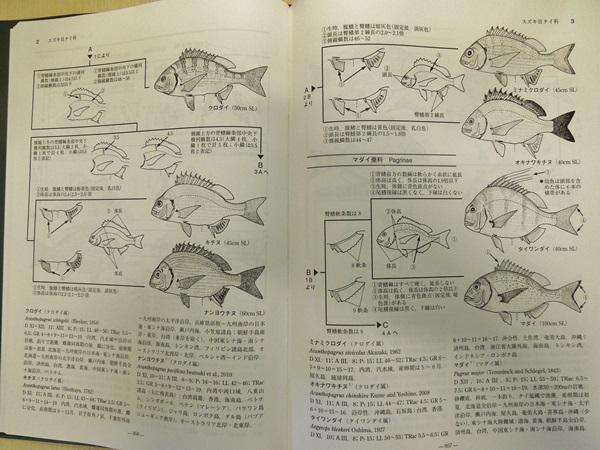 日本産魚類検索の検索表は便利