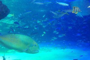 神奈川は水族館がたくさん