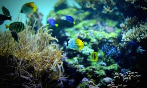 千葉 水族館
