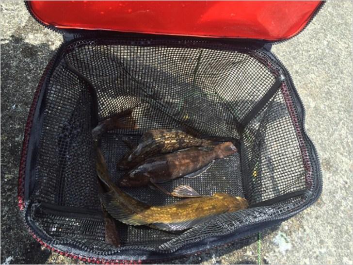 スカリで魚を新鮮にキープ
