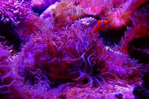 人工海水で手軽に飼育