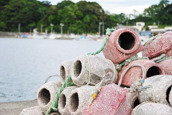 タコ釣りは漁業権に注意