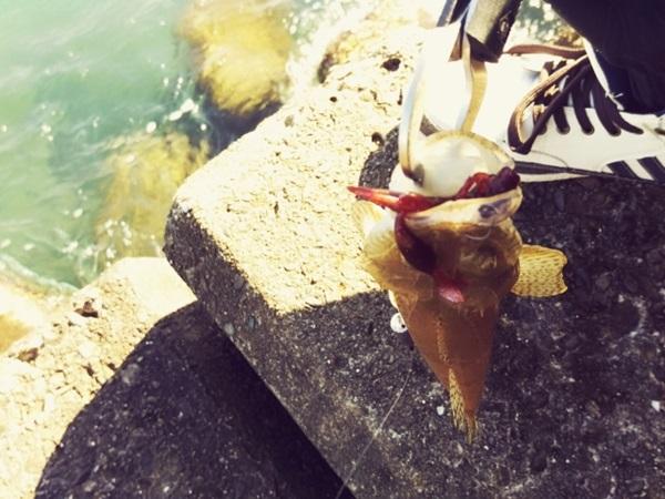 マゴチ釣りを始めよう!