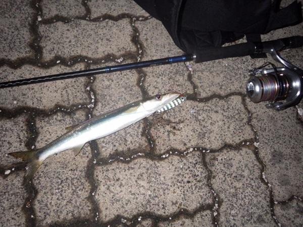 カマス釣りの釣法