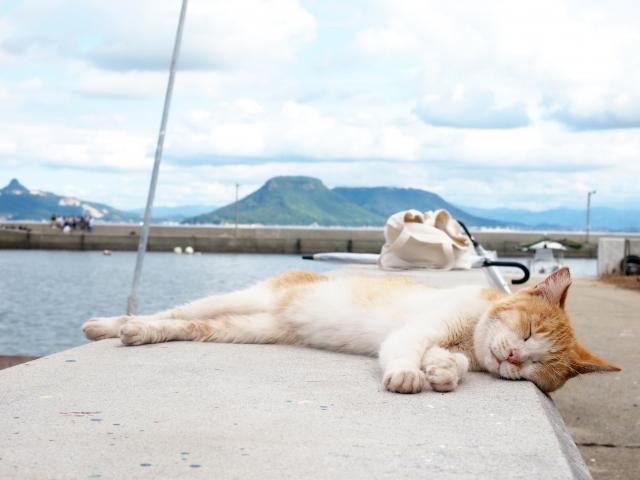 夏の金魚の飼い方
