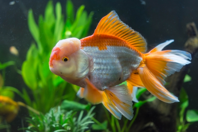 熱帯魚ショップをみてみる