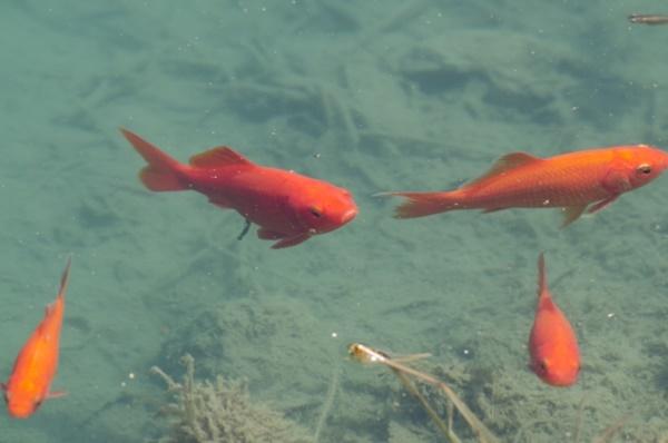 どんぶり金魚で水を見る目を養う