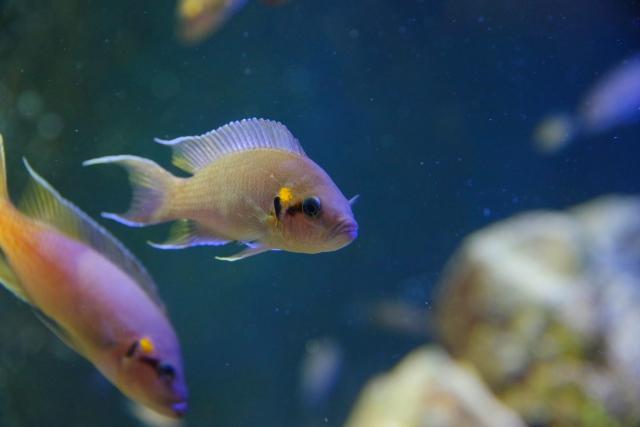 お気に入りの熱帯魚ショップを見つけよう