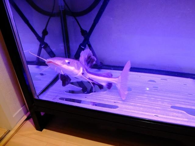 熱帯魚ショップの画像3
