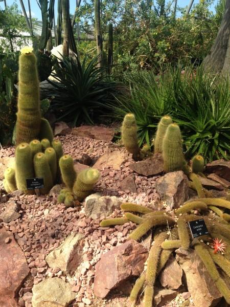 cactus au Royal Botanic Garden - Edimbourg