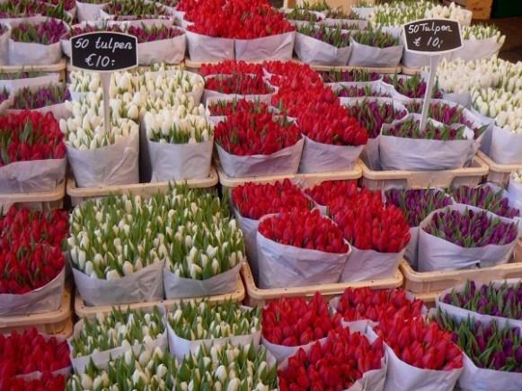 tulipes - Amsterdam