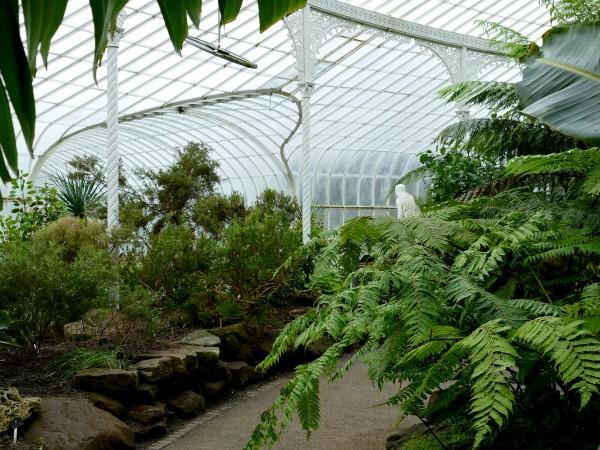 le jardin botanique de Glasgow