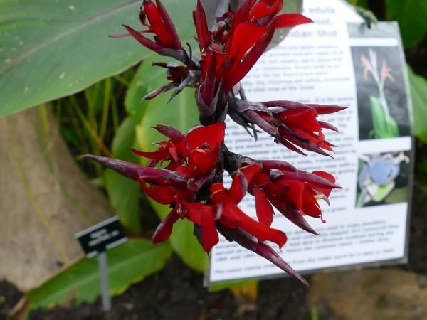 fleur dans le jardin botanique de Glasgow